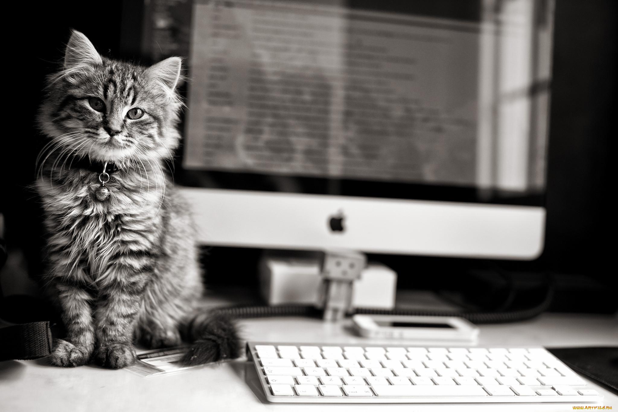 Прикольный котик картинка для клавиатуры монтгомери фильмы